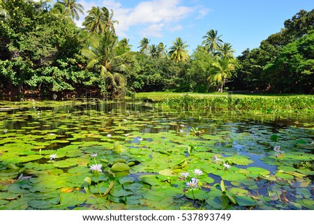 tropical lilies on the lake during a bright day in Hawaii Big Island