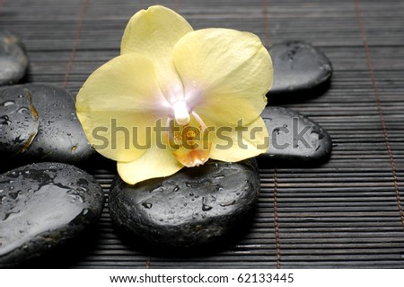 Tropical macro of yellow orchid on the black zen stones in water drops - stock photo