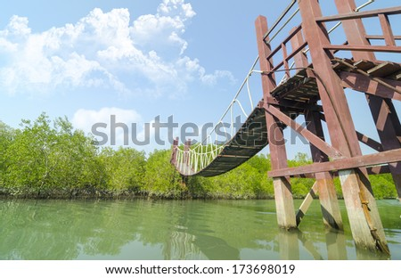 tropical mangrove forest with blue sky in Thailand - stock photo