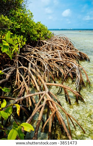 Tropical Mangroves - stock photo