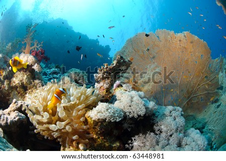 Tropical Marine coral reef scenic