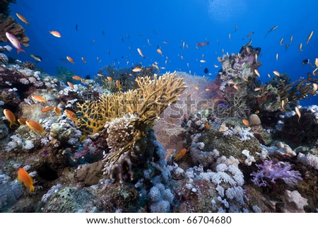 Tropical marine life in the Red Sea.