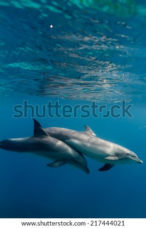 tropical marine life with wild dolphins underwater