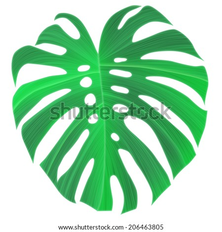 Tropical monstera leaf. stylish fashion background, in Hawaiian style. Isolated - stock photo