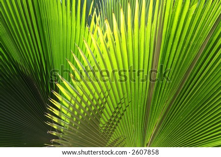 Tropical mood. - stock photo