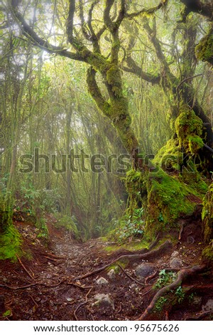 Tropical mossy thick Forest during morning lights - stock photo