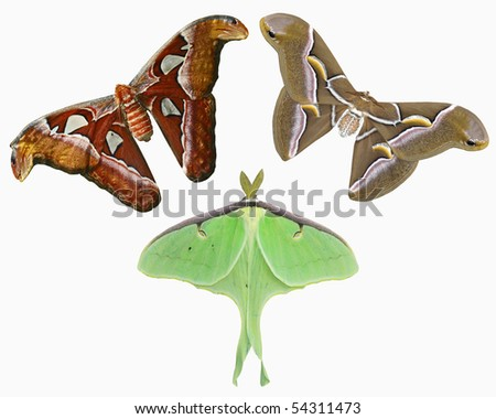 Tropical Moth Collection - stock photo