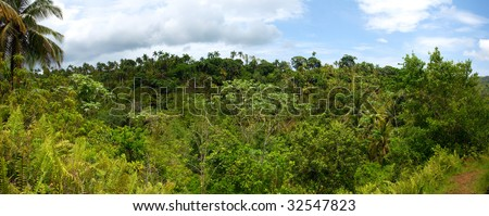 Tropical Mountain Forest. High-resolution 120 degrees panorama. Any part may be cut out as separate image. - stock photo