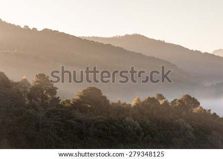 Tropical mountain mist at doiangkhang in Chiangmai,Thailand