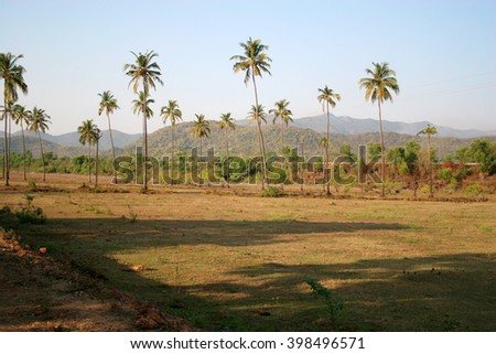 Tropical nature of Goa India. Palm trees and hills