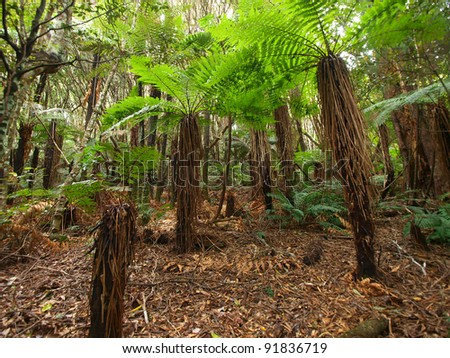 Tropical New Zealand forest - stock photo