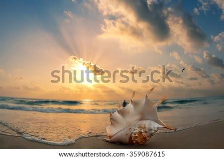 Tropical ocean paradise design postcard. Sandy beach with seashell at the shorebreak line - stock photo