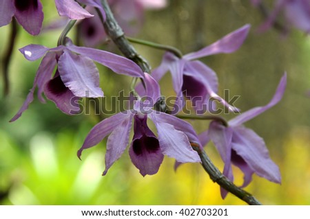Tropical Orchid flowers closeup