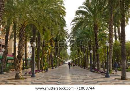 Tropical palm alley in Alicante, Spain, Europe - stock photo