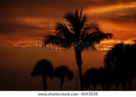Tropical Palm Beach Sunset - stock photo