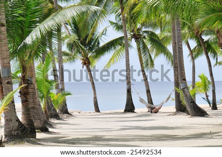 Tropical Palm beach with Hammock - stock photo