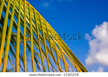 Tropical Palm Frond Detail Against Bright Blue Sky - stock photo