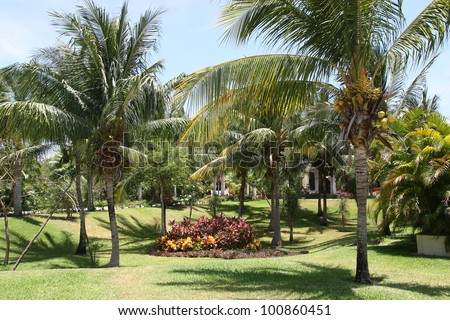 Tropical palm garden in beautiful paradise - stock photo