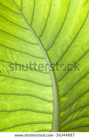 Tropical palm leaf - stock photo
