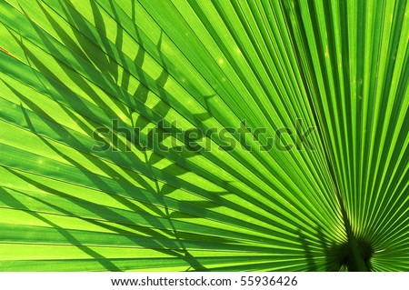 Tropical palm leaf and shadow