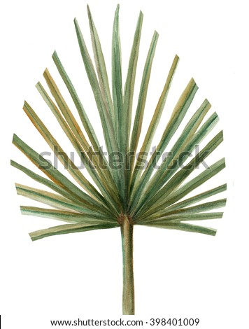 tropical  palm leaf plant botanic watercolor painting on white background - stock photo