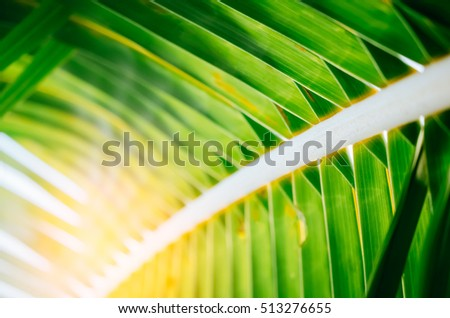 Tropical palm leaf with sun light background. Summer vacation and nature travel concept. Vintage tone filter color style.