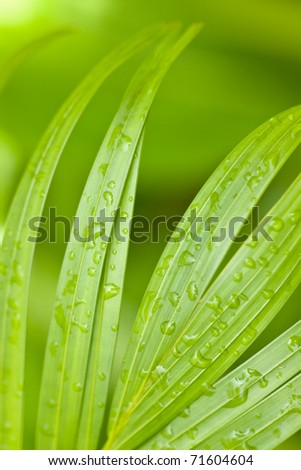 Tropical Palm Leaves and Rain Drops Background - stock photo