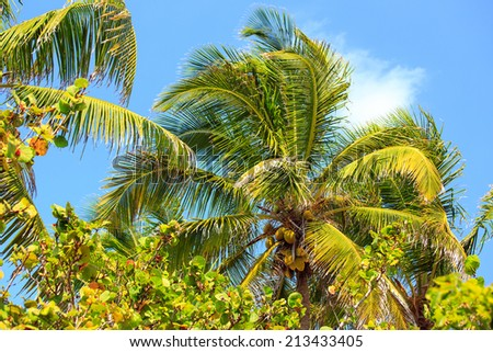 Tropical palm tree against the background of blue sky in Mexico