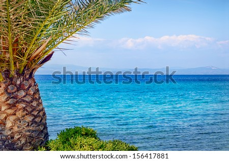 Tropical palm tree closeup and blue see background - stock photo
