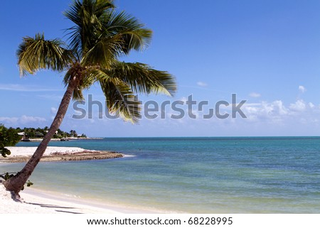 Tropical palm tree hangs over the beach on Marathon Key in the middle of the Florida Keys. A lone swimmer snorkels in the distance. - stock photo
