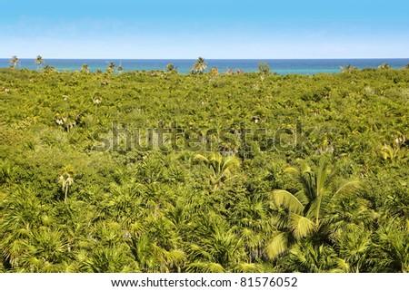 tropical palm tree jungle in Sian Kaan near Tulum Mexico - stock photo
