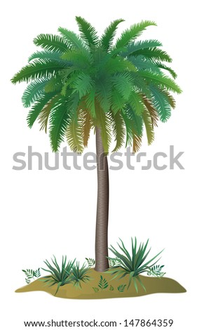 Tropical palm tree with green leaves and plants on white background.