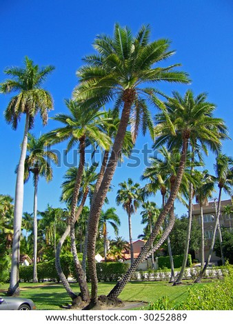 Tropical Palm Trees - stock photo