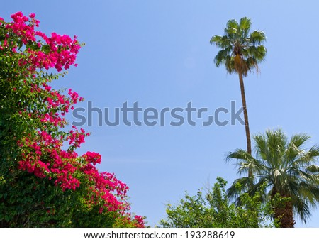 Tropical palm trees and flowers desert oasis background - stock photo