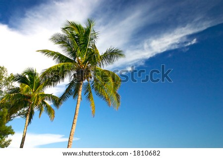 Tropical palm trees in the late afternoon sun. - stock photo