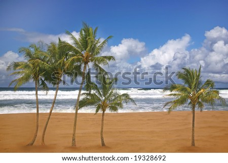 Tropical Palm Trees on a Beach Front in Kauai Hawaii - stock photo