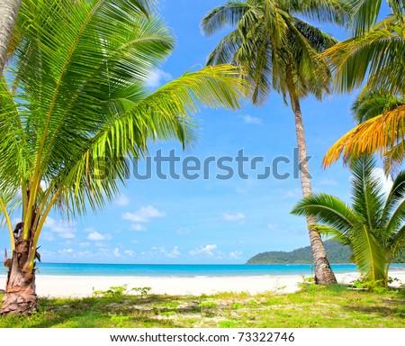 Tropical palm trees on the beach near the sea - stock photo