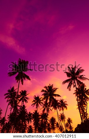 Tropical palm trees silhouettes at sunset - stock photo