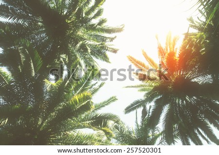 tropical palm trees  with sunshine  on sky background, retro toned - stock photo