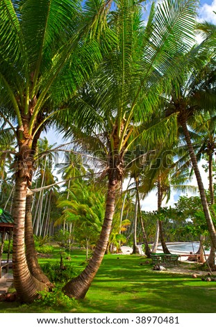 Tropical palms beach - stock photo