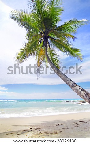 Tropical paradise in Maldives with a palm hanging over the beach and turquoise sea