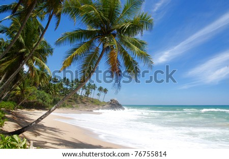 Tropical paradise in Maldives with palms hanging over the beach and turquoise sea - stock photo