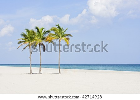Tropical paradise in Miami Beach Florida with Palm trees and ocean background - stock photo