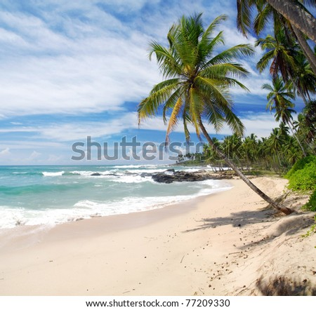 Tropical paradise in Sri Lanka, Tangalle with palms hanging over the beach and turquoise sea - stock photo