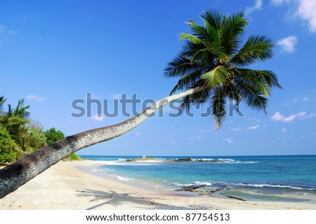 Tropical paradises with a palm hanging over the beach and turquoise sea - stock photo