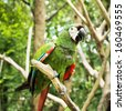 tropical parrot - stock photo
