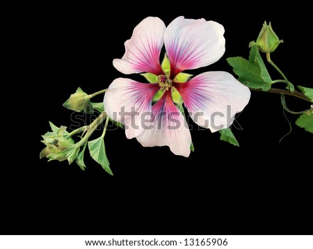 Tropical Passion - stock photo