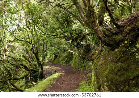 Tropical path leading through the rain forest of Madeira
