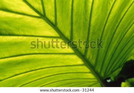 Tropical plant leaf - stock photo