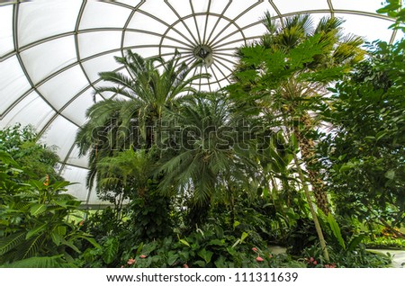tropical plants growing in conservatory - stock photo